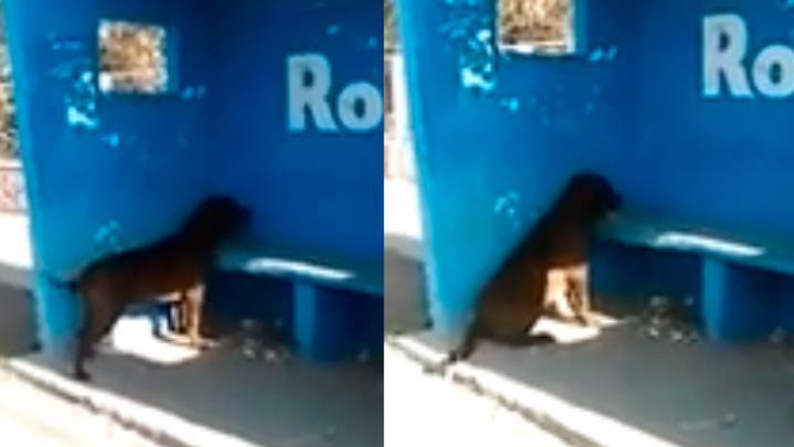 В Аргентине пес несколько дней часами смотрит на пустую синюю стену и виляет хвостом. Что он там видит?