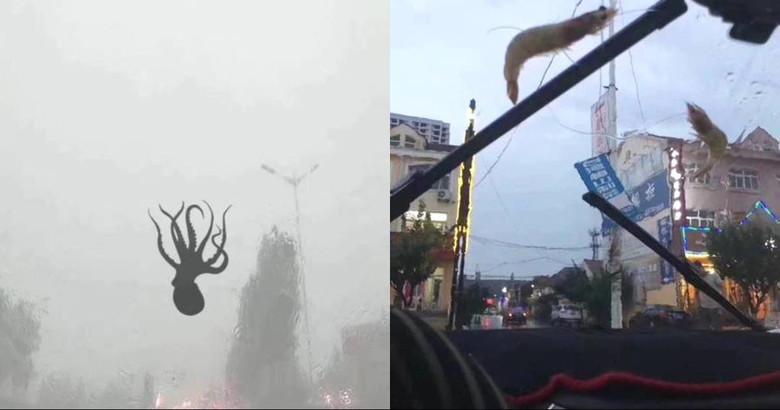 На китайский город обрушился дождь из осьминогов и креветок (5 фото)