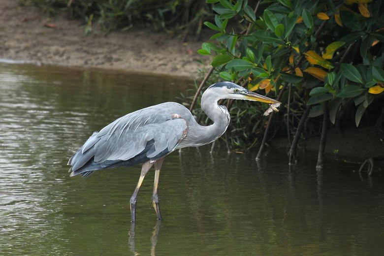 Тайна огромной птицы Рио-Гранде (5 фото)