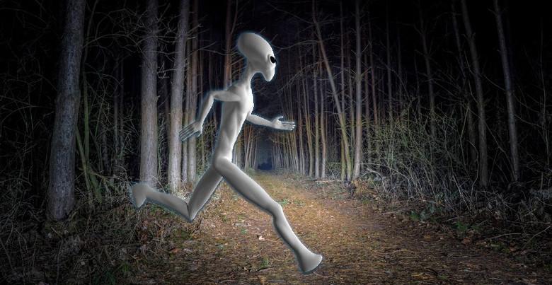12-летняя девочка из Орегона рассказала, что видела в лесу пришельца (2 фото)