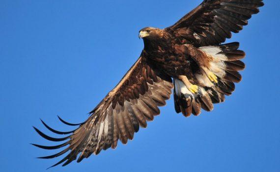 Парк возле Йеллоустона на самом деле закрыли из-за загадочной золотой птицы? (4 фото + аидео)