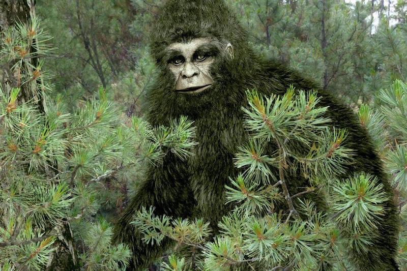 Охотник встретил в лесу нечто крупное и потом нашел на том месте отпечаток большой ноги