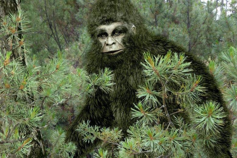 Охотник встретил в лесу нечто крупное и потом нашел на том месте отпечаток большой ноги (3 фото)