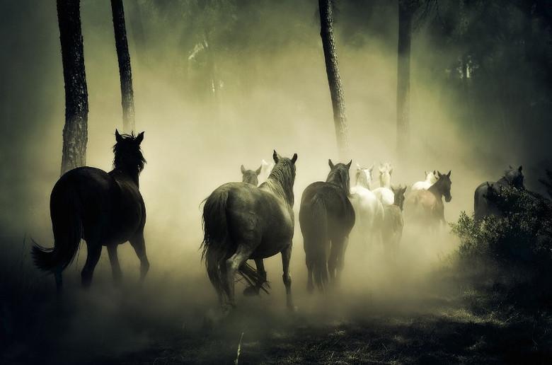 Зависший НЛО очень сильно напугал наше стадо из 22 лошадей (2 фото)