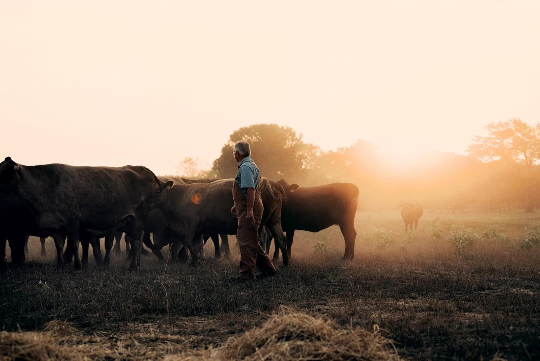 С 2014 года на небольшой ферме в Техасе загадочным образом умирают телята и никто не понимает почему