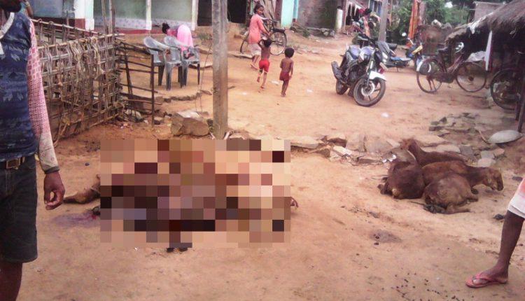 Загадочный зверь за пару ночей распотрошил 10 овец в Индии