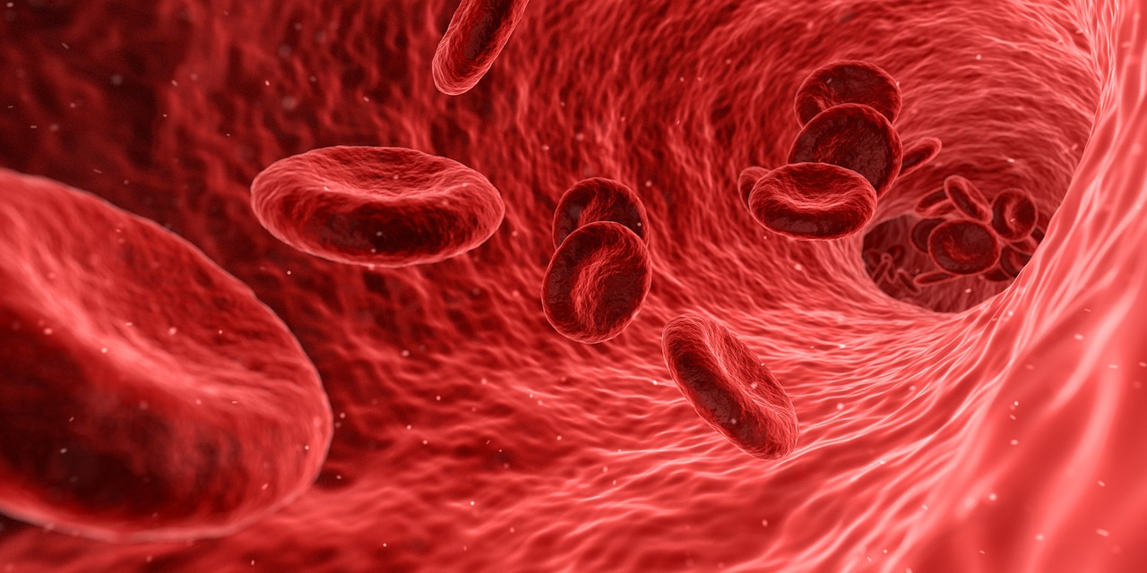 Переливание молодой крови помогает бороться со старением