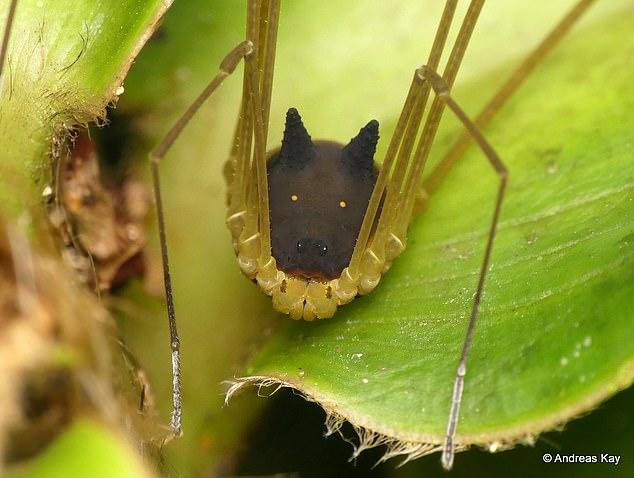 Голова собаки на тонких паучьих ножках удивила пользователей интернета