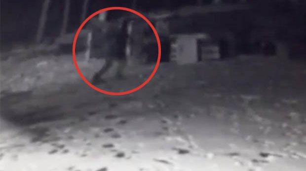 Собака лаяла на кого-то, ее хозяин установил камеру и заснял странное существо