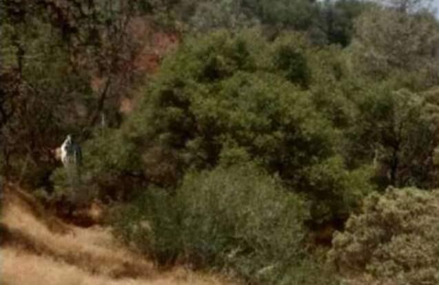 Девушка случайно засняла странное существо в кустах