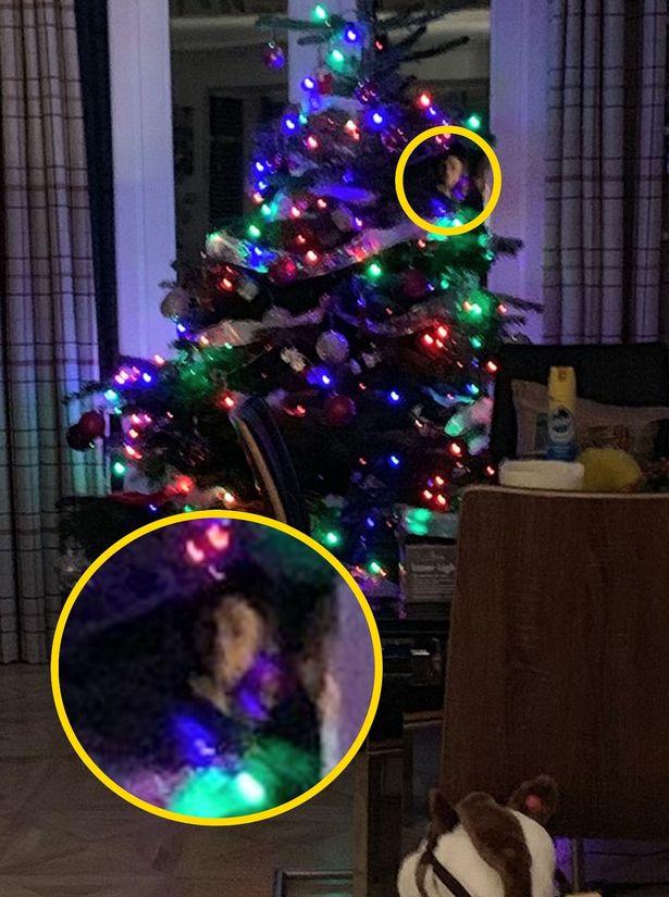 Призрак спрятался за рождественской елкой 2