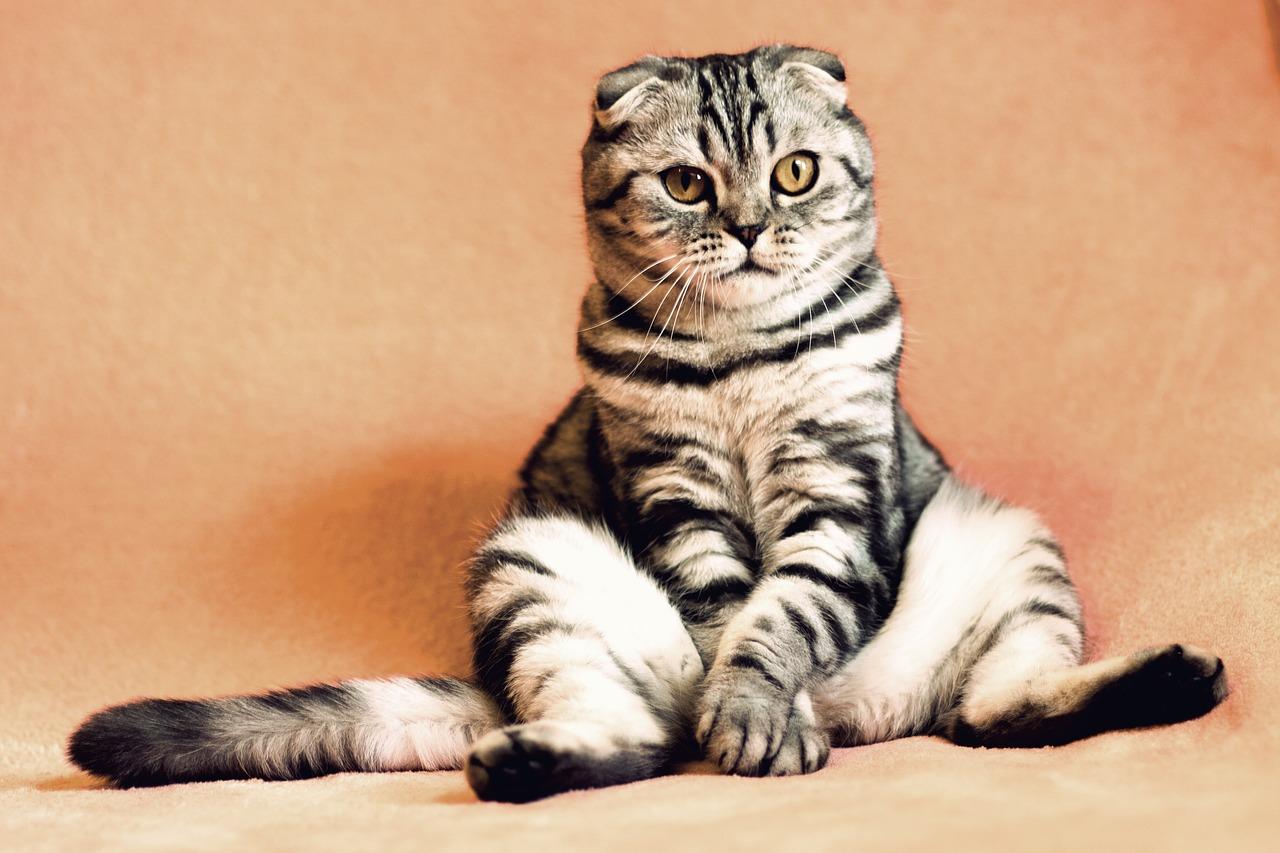 Экстрасенс по домашним животным говорит, что может общаться с любым живым или мертвым питомцем