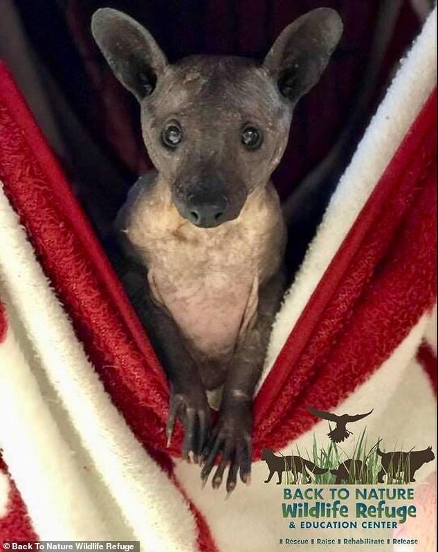 Во Флориде обнаружили странное животное и долго не могли понять, кто это такой