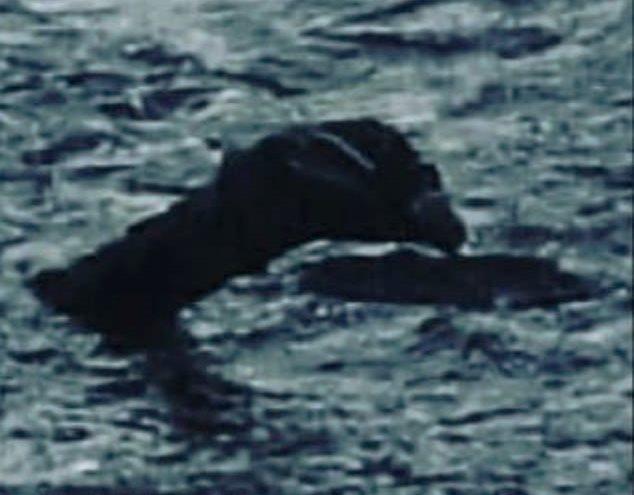 Шотландского монстра Несси впервые засняли вблизи и очень четко