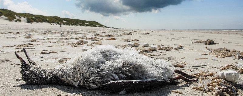 Птичий мор: к чему приведет переезд «АБЗ №1» из Коломяг в Конную Лахту