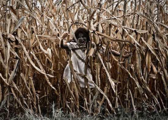 Жуткие встречи в кукурузных полях