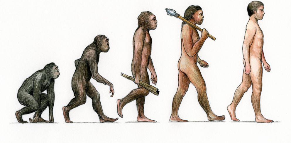 Шесть частей человеческого тела, ставшие бесполезными еще тысячи лет назад