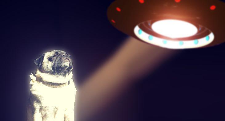 Треугольный НЛО встревожил и напугал собаку