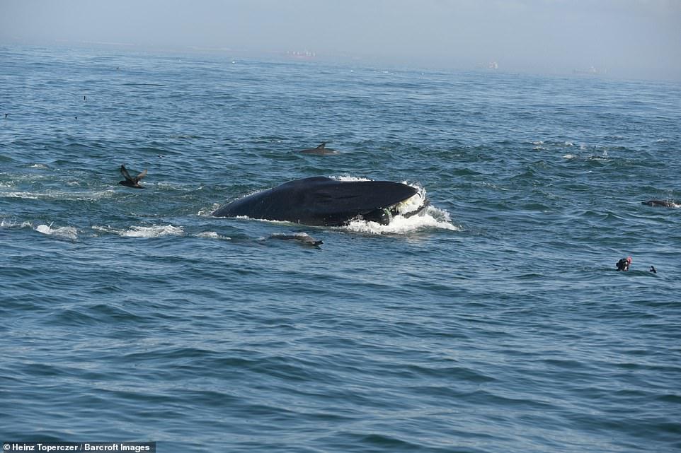 Южноафриканский дайвер попал в пасть кита