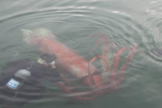 В Японии паром столкнулся с неопознанным морским существом