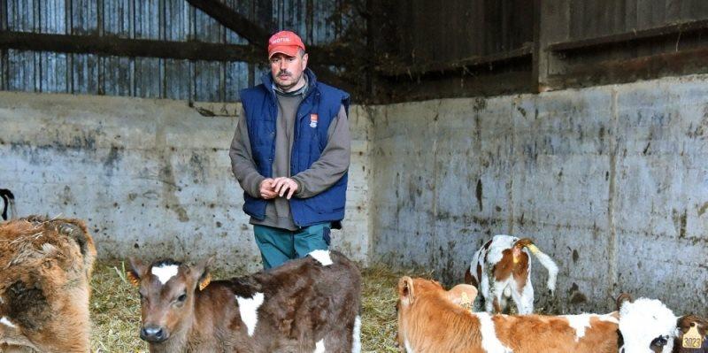 Французские фермеры пытаются выяснить, от чего загадочным образом гибнут их коровы