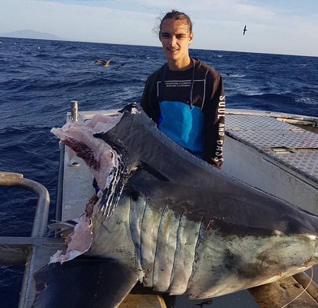 Кто отгрыз голову этой гигантской акуле?