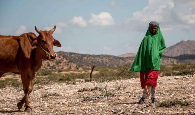 Сыпь у людей и обезумевшие животные: Странные последствия загадочного взрыва в Африке
