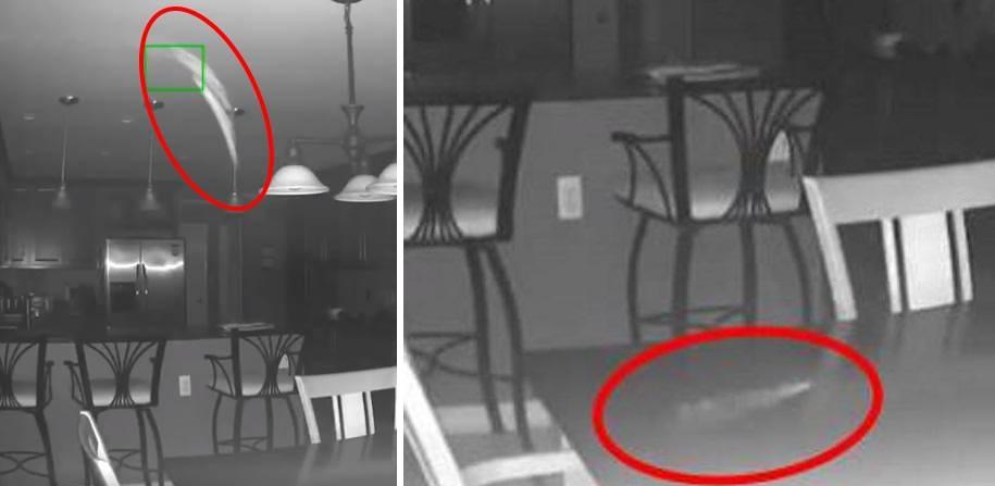 После смерти собаки на камеру засняли странный белый объект