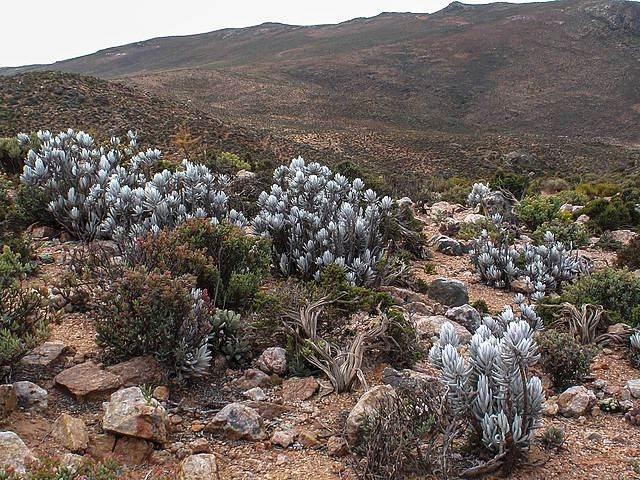 Африканская пещера, которую охраняет загадочная громадная змея