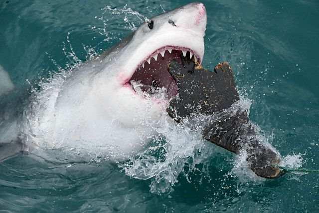 Обнаружен хищник, которого боятся даже большие белые акулы