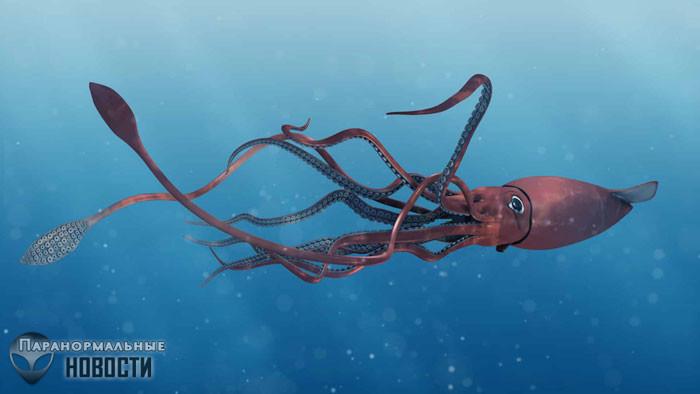 В Мексиканском заливе засняли гигантского кальмара