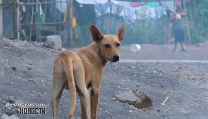 Странную собаку с женской грудью видели в Мексике