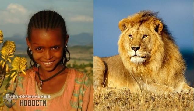 Львы спасли девочку от похитителей и другие истории о необычных животных-защитниках