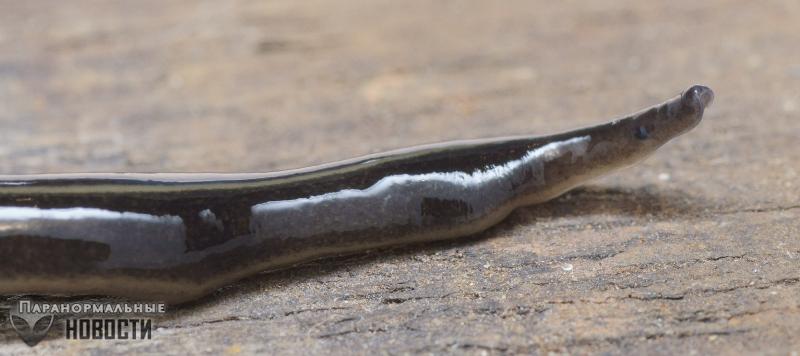 Жительницу Техаса напугали склизкие черные черви