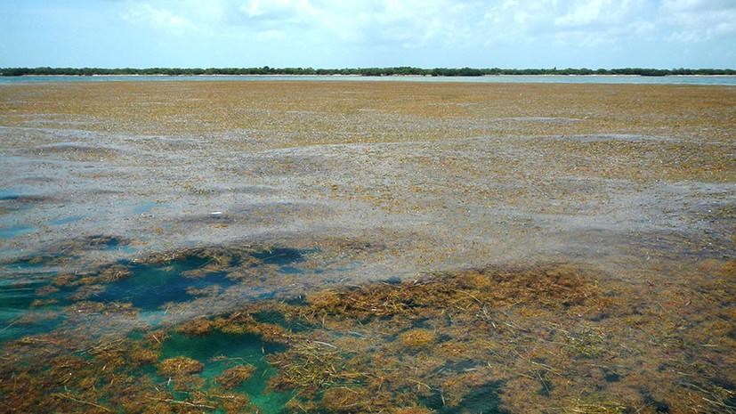Аномалия в Атлантике: В океане стали активно размножаться бурые водоросли