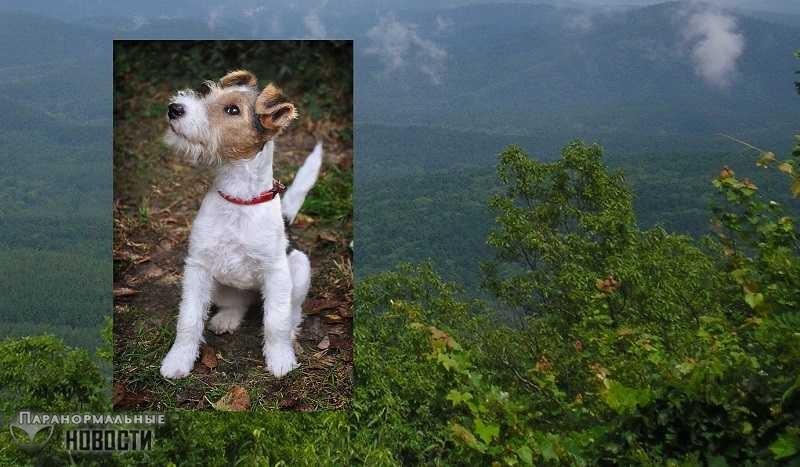 Легенда о Фокси - призрачной собаке, умершей от тоски по хозяину