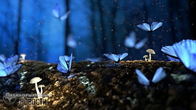После смерти парня, обожавшего бабочек, красивые бабочки стали прилетать к его сестре