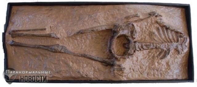 Женщина из Гваделупы: Неуместный артефакт возрастом в 28 миллионов лет
