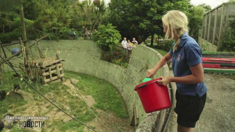 Страшное происшествие в британском зоопарке