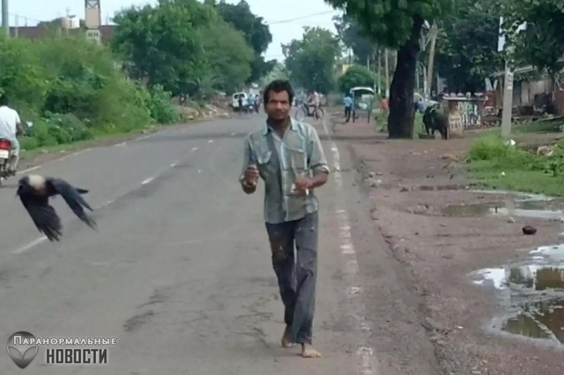 Вороны уже три года мстят мужчине, на руках которого умер вороненок