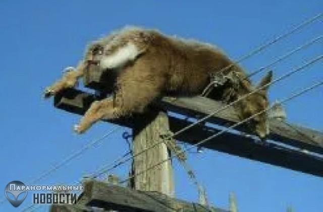 Как он туда попал? Загадка мертвого оленя на верхушке столба