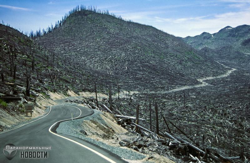 История о бигфутах, погибших в 1980 году от извержения вулкана