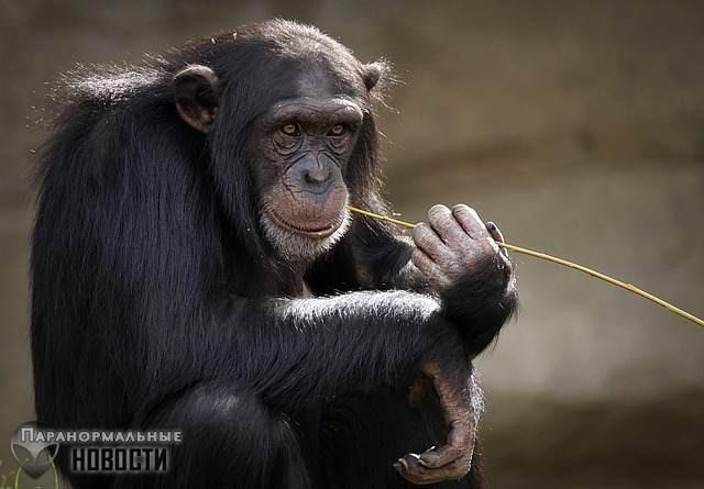 Жителей техасского городка терроризирует загадочная большая обезьяна