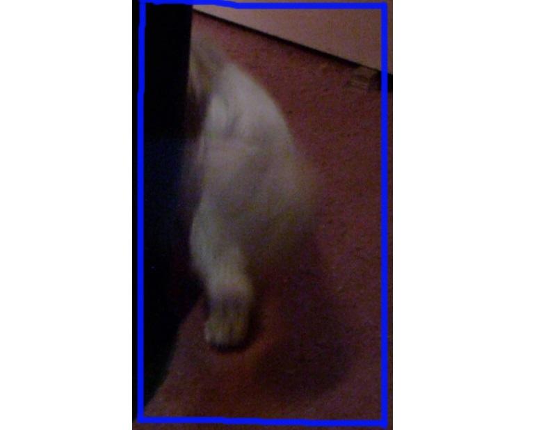 Мужчина сфотографировал призрак своей кошки