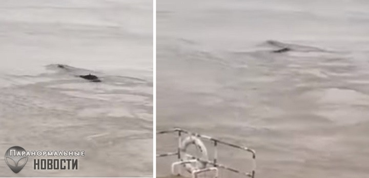 В Китае сняли на видео загадочное длинное существо в реке