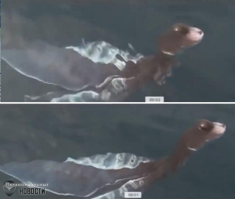 Детеныш плезиозавра? В Таиланде засняли в воде очень странное существо