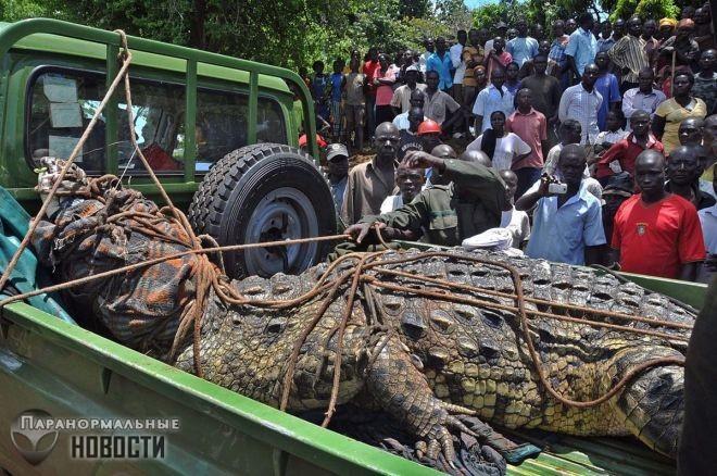 Загадочный 6-метровый крокодил убивает людей в Бурунди