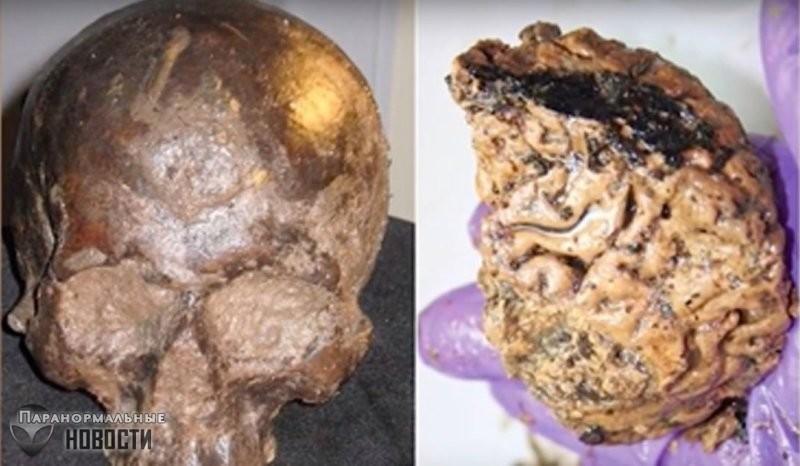 Странный феномен 2600-летнего окаменевшего человеческого мозга