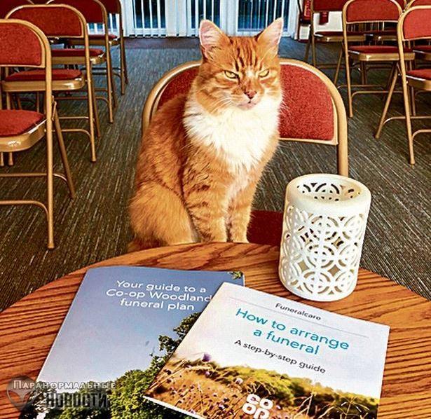 Странный кот с «шестым чувством» любит посещать похороны