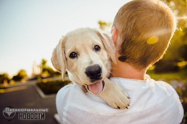 Собаки могут чувствовать время по ...запаху?